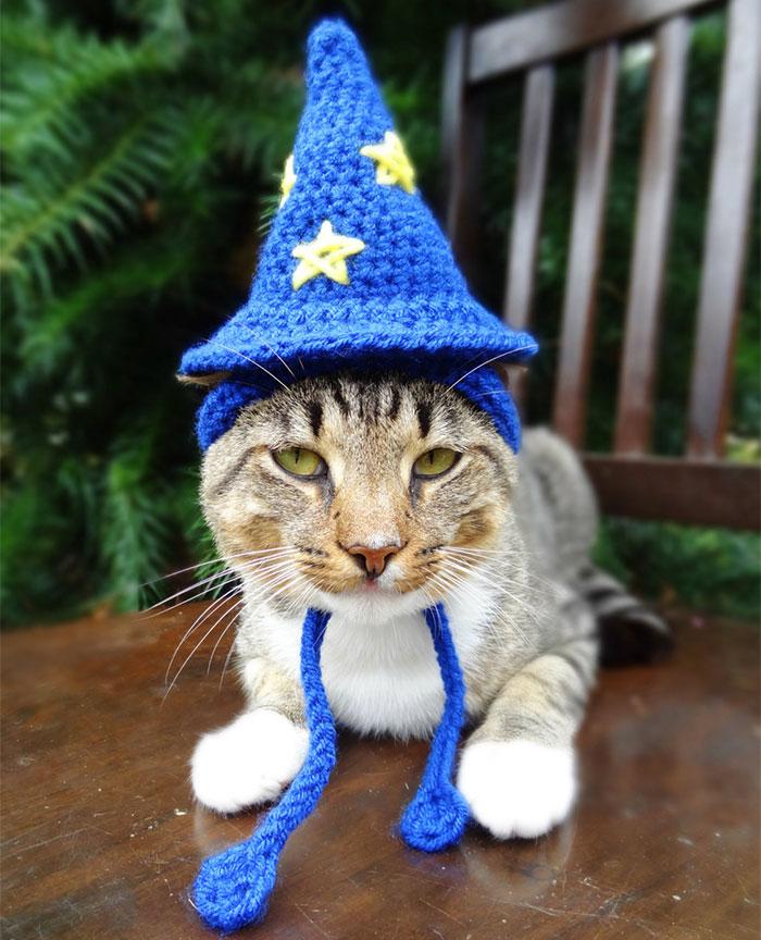 crochet-handmade-hats-pets-iheartneedlework-18__700