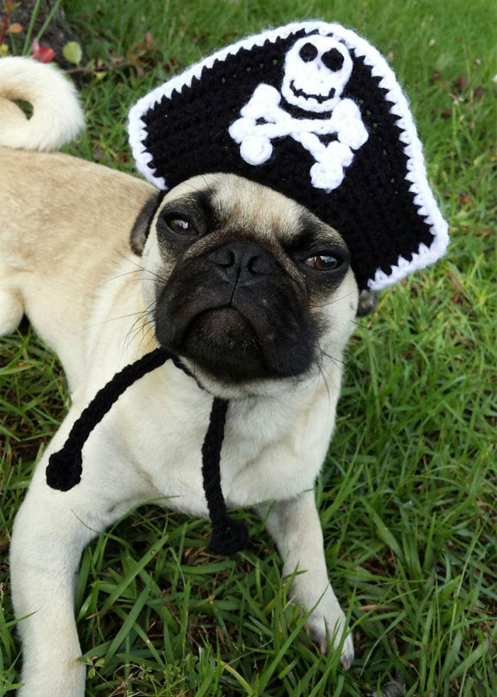 crochet-handmade-hats-pets-iheartneedlework-19__700