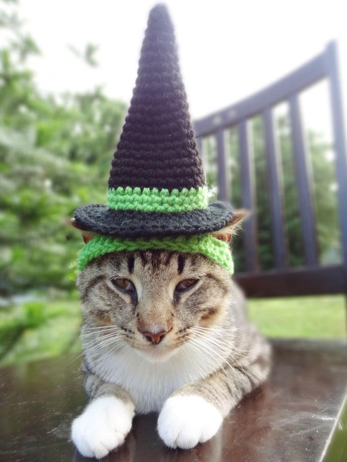 crochet-handmade-hats-pets-iheartneedlework-22__700