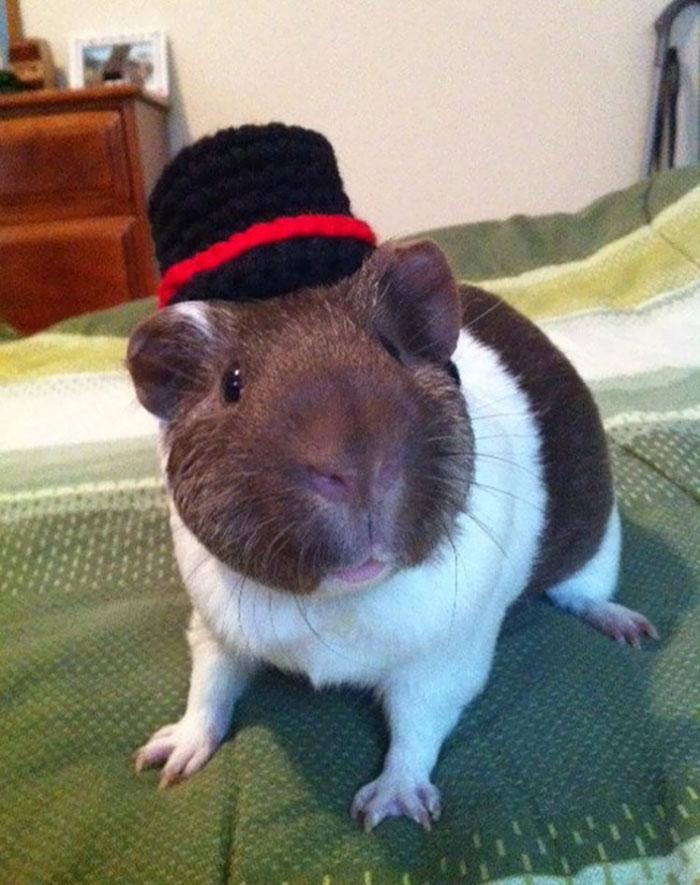 crochet-handmade-hats-pets-iheartneedlework-23__700