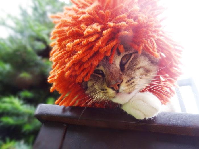 crochet-handmade-hats-pets-iheartneedlework-6__700