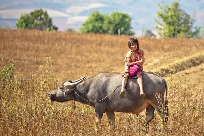 233555-R3L8T8D-650-children-going-to-school-around-the-world-24