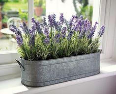 9 plantas medicinales que puedes sembrar en casa caracteres Cultivar lavanda en casa