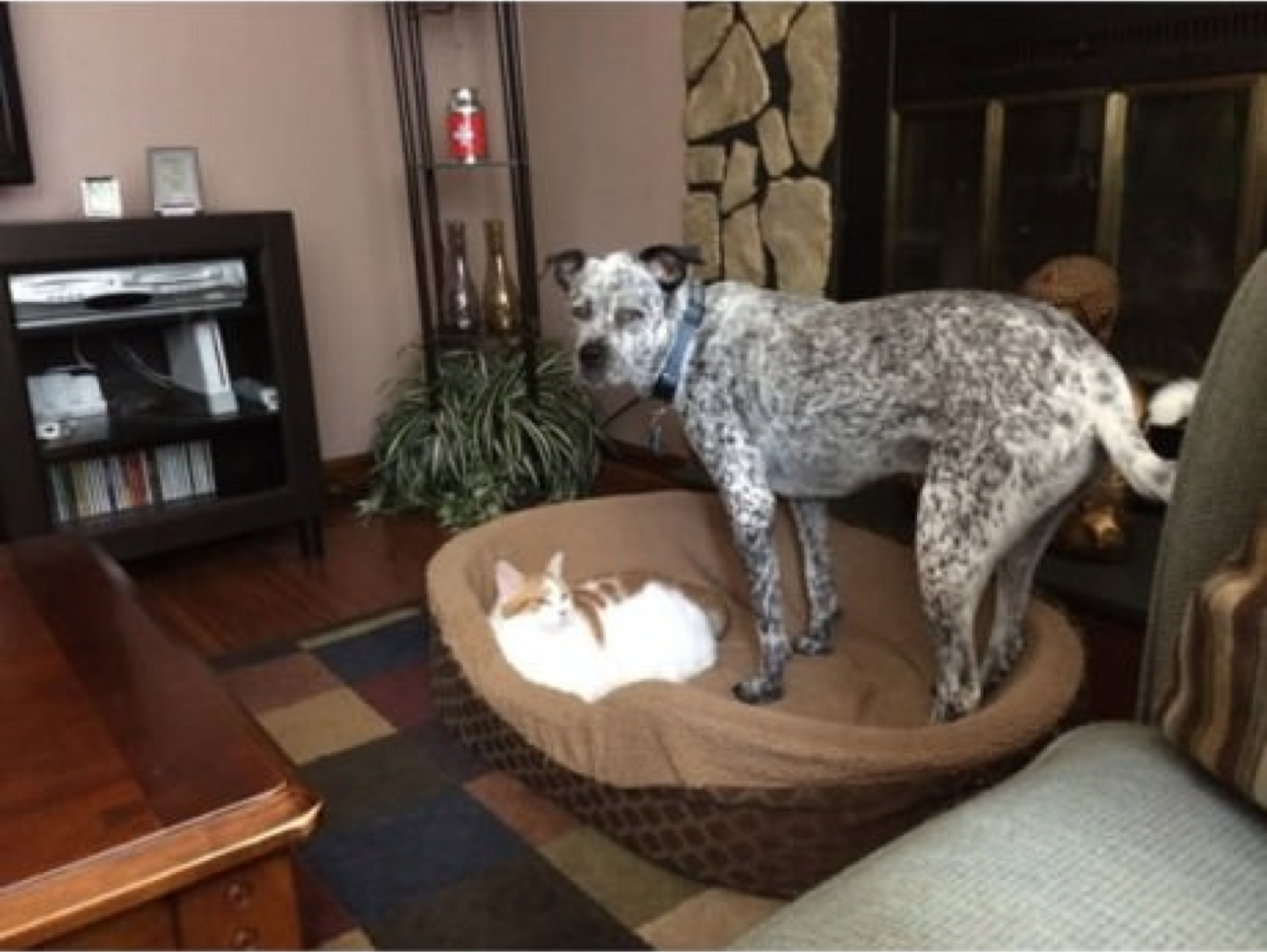 perros y gatos