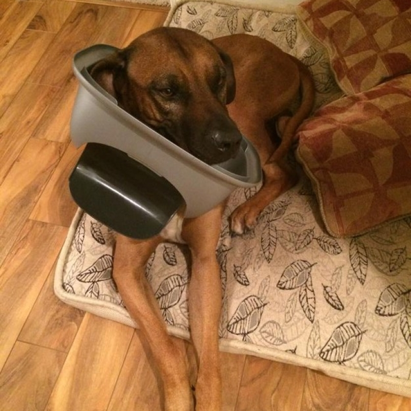 reddit-dog-jokes-18-808x808
