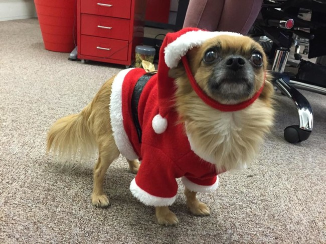 mascotas que odian la Navidad