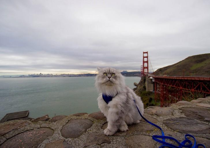 Conoce a Gandalf el gato que tiene vacaciones más divertidas que tú