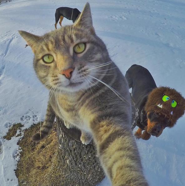 las selfies
