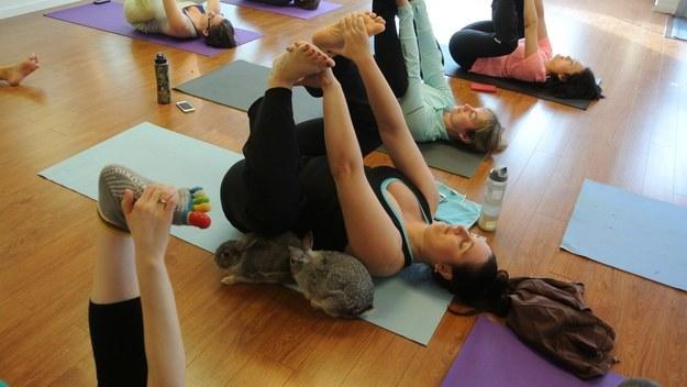 yoga con conejitos