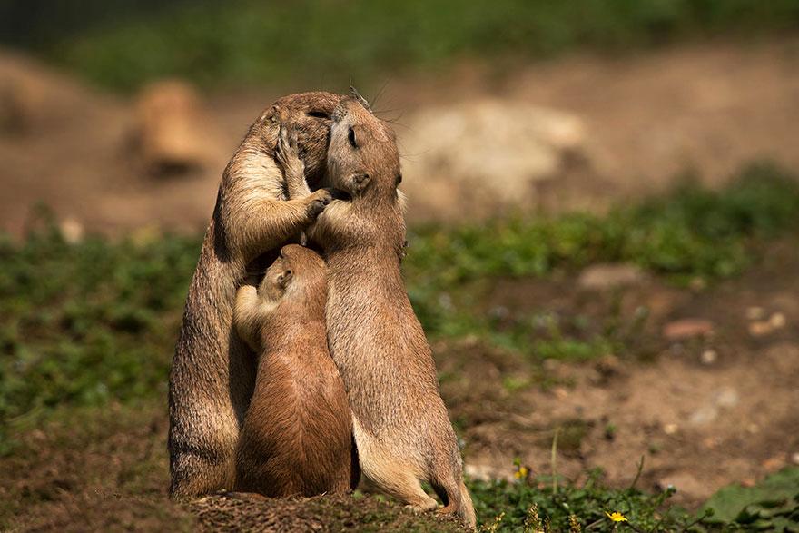 los animales también se enamoran